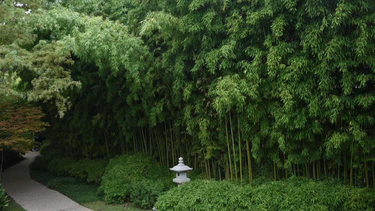 Le bambou pour un jardin zen