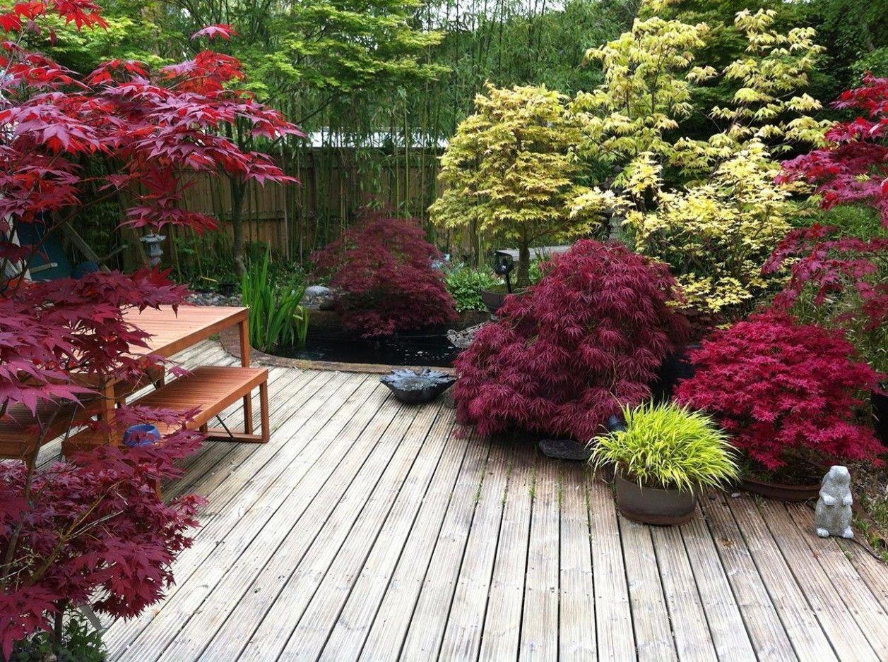 erables dans un jardin japonais